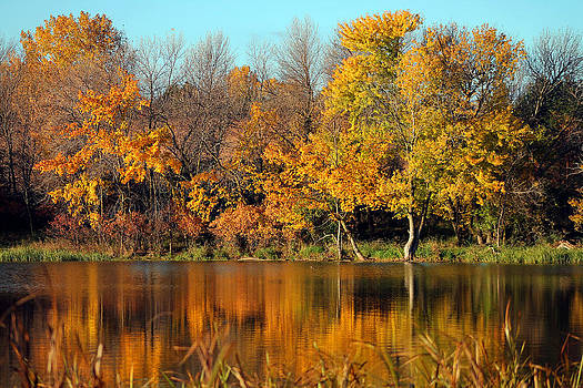 Fall Reflection by Steve ODonnell