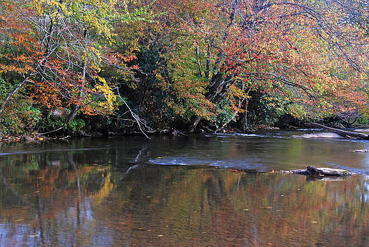 Fall Reflections by Cecile Brion