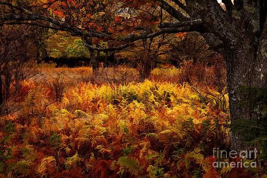 Dan Carmichael - Fall Shadows - Dolly Sods West Virginia