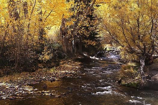 Fall Stream by David Winge