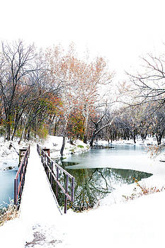 Fall to Winter by Betty Morgan
