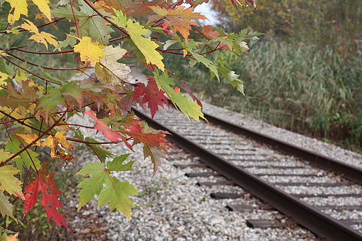 Fall Track by Terry Hooper