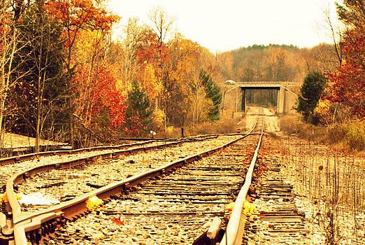 Fall Tracks by Stephanie Grooms