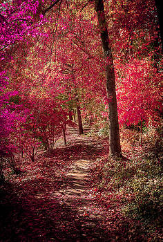 Fall Trail by Theodore Lewis