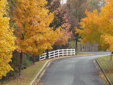 Fall Trees by Pamela Morrow