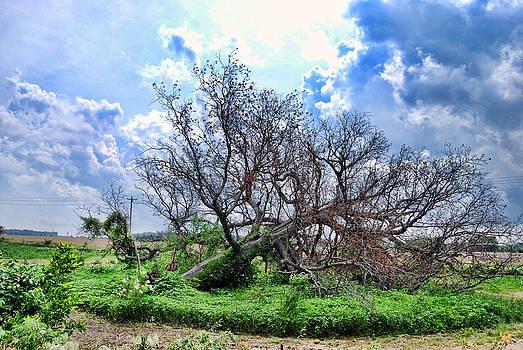 Fallen Family Tree by Mark Orr