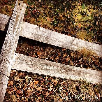 Fallen Fence  by Alicia Whiteford