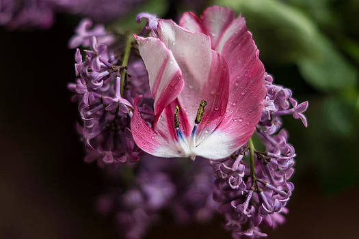 Fallen Flower by Linda Storm