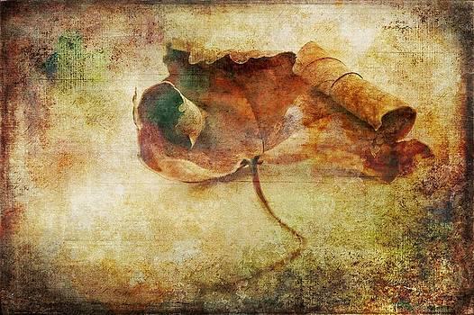Fallen Leaf by Anne Macdonald