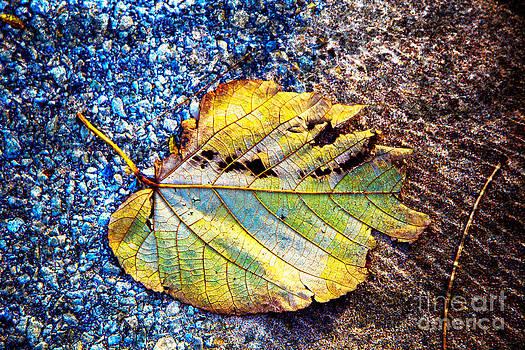 Fallen Leaf by Jeanette Brown