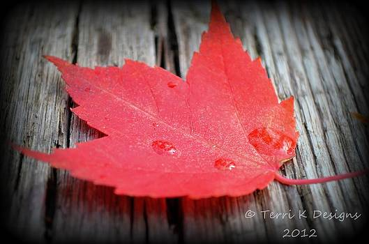 Fallen Leaf by Terri K Designs