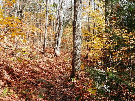 Fallen Leaves 1 by Pema Hou