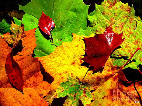 Fallen Leaves by Denny Ragan