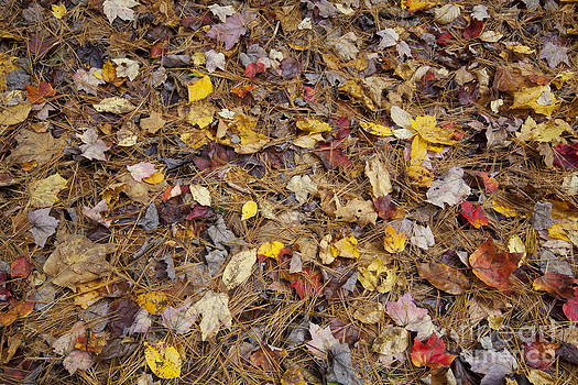 Jonathan Welch - Fallen Leaves