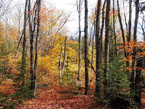 Fallen Leaves by Pema Hou