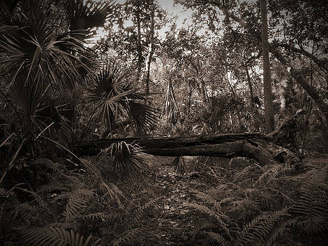 Fallen No. 2 by Phil Penne