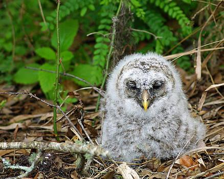 Fallen owl by John Myers