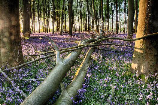 Fallen tree in bluebells by Simon Bratt Photography LRPS