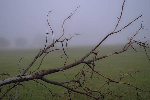 Fallen Tree by Ken Rutledge