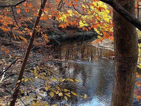 Falling in Love with Fall by Dorin Adrian Berbier