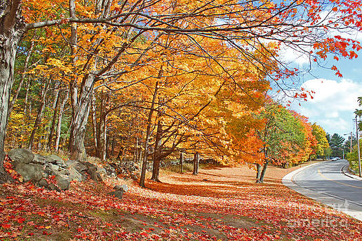Falling Leaves on the Road to Bentley by Rita Brown
