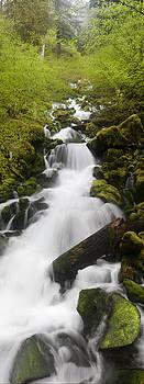 Falls Creek  by David  Forster