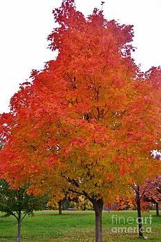 Fall's Glory by Brigitte Emme