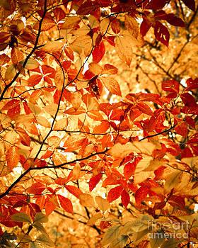 Sonja Quintero - Falls Leaves