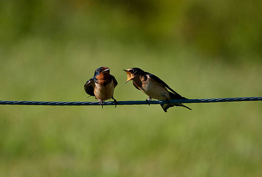 Family Matters by Dave Weth
