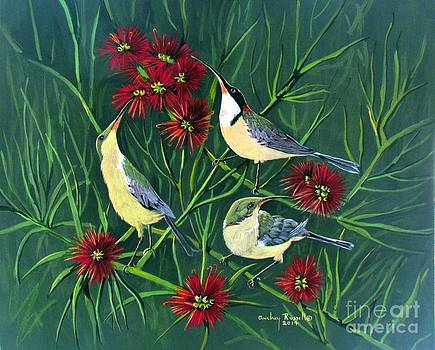Family of eastern Spinebills by Audrey Russill