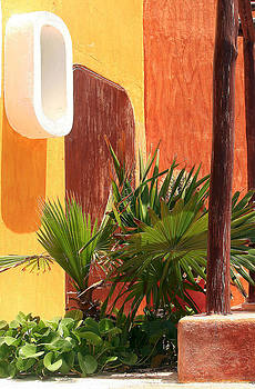 Fan Palm on Patio by Jack Thomas