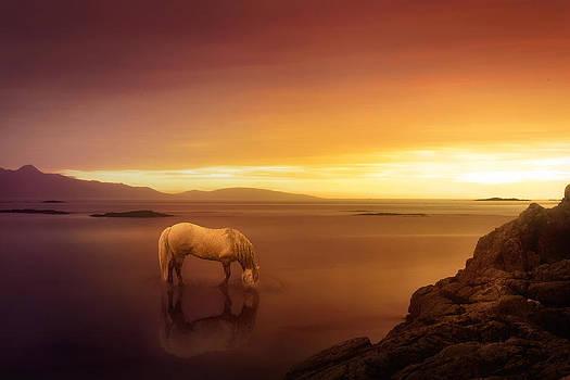 Fantasy Land by Jennifer Woodward