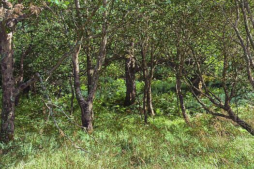 Jane McIlroy - Fantasy Woodland Scene