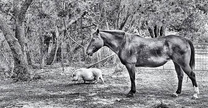 Farm Animals by Sandra Moore