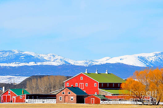 Birches Photography - Farm in the Winter