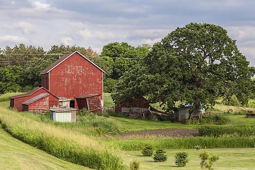 Farm Tree by CJ Schmit