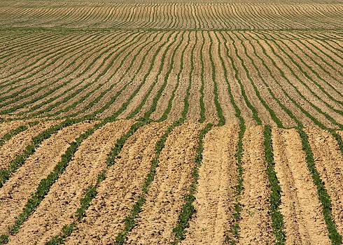 Farmer's Field by Jim Nelson