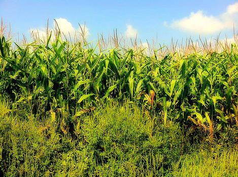 Farmer's Pride by Tanya Renee Herb