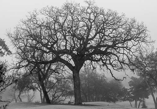 Favorite Tree in Fog by Linda Dyer Kennedy