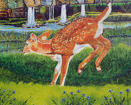 Fawn in the holle by Sandra Wilson