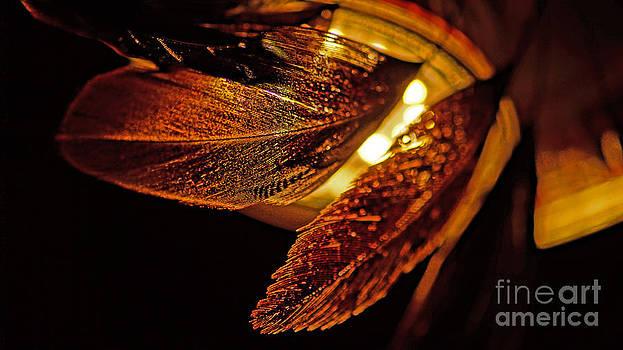 Feather In The Back Light by Eva-Maria Di Bella