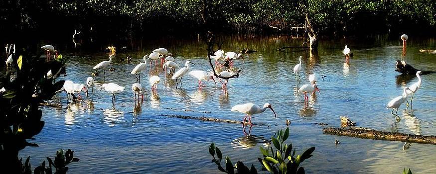 Feathered Coastal Society by Will Boutin Photos