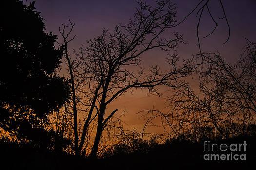 Teresa Mucha - February Sunrise