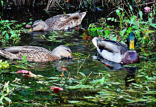 Feeding time at duck pond by Mikki Cucuzzo