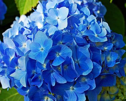Feeling Blue by Randall Templeton