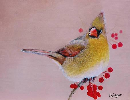 Female Cardinal by Jean Yves Crispo