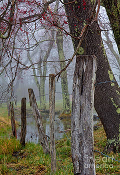 Fence in Cades Cove by Douglas Stucky