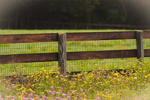 Fence-line flowers by Heather Palmer