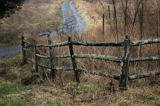 Fenced by Elizabeth Wilson