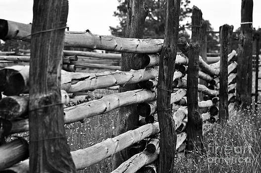Fenced In  by Juls Adams